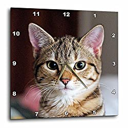 3dRose dpp_46669_1 Hello Kitty Animal, Moggie, Tabbies, Tabby Cat, Cat, Cats, Cute Wall Clock, 10 by 10-Inch