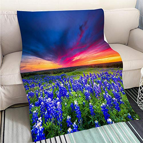 Comforter Multicolor Bed or Couch Field of Blue Flowers on Sugar Ridge Road Ennis Texas Hypoallergenic Blanket for Bed Couch Chair ()
