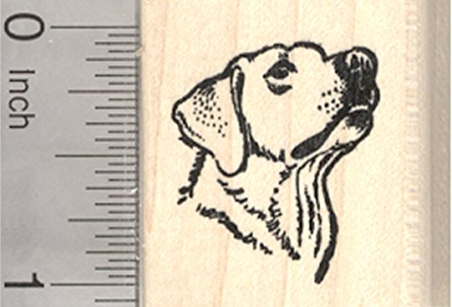 Labrador Retriever Rubber Stamp, Portrait, Small