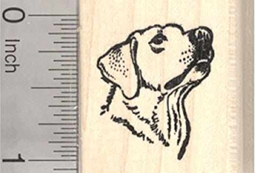 Labrador Retriever Rubber Stamp, Portrait, Small