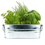 BUZZY Organic Windowsill Grow Kit   Kitchen