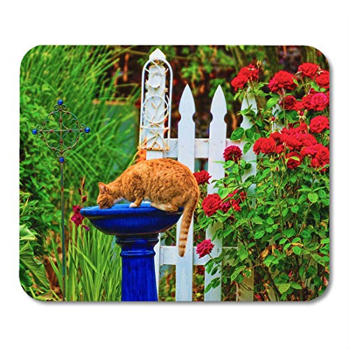 (Emvency Mouse Pads Orange Tabby Cat Drinking Out of The Bird Bath Mouse Pad for notebooks, Desktop Computers mats 9.5