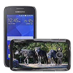 Super Stella Slim PC Hard Case Cover Skin Armor Shell Protection // M00104246 Wolves Animals Animal World Howl // Samsung Galaxy Ace4 / Galaxy Ace 4 LTE / SM-G313F