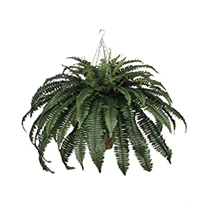 House of Silk Flowers Artificial Fern in Hanging Square Basket 1