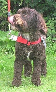 Walk Your Dog With Love Sports Edition 8-16kg, ORANGE