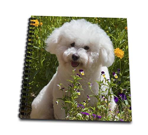 Bichon Frise Notepad - 3dRose Bichon Frise Sitting in Flowers Drawing Book 4 x 4