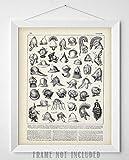 Military Helmets Illustration - 11x14 Unframed