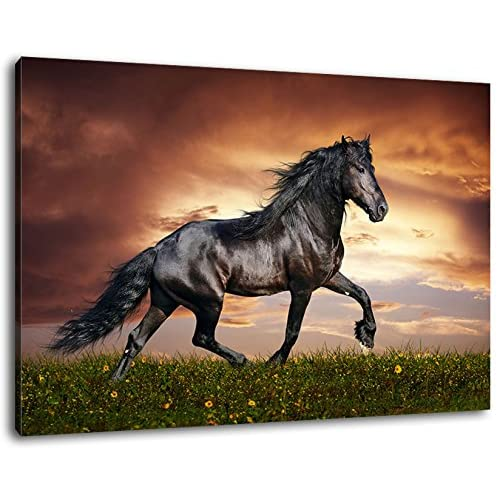 Horse Pictures For Walls And Framed Amazon