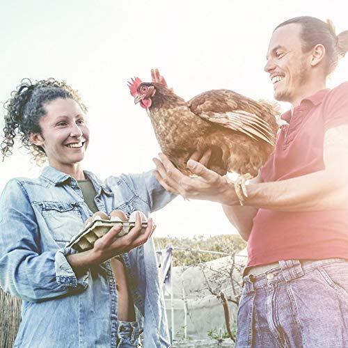 Buy chicken coops