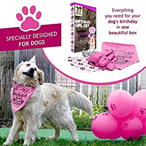 ZOOniq Dog Birthday Girl Bandana with Paw Print Party Cone Hat and 10 Balloons - Great Dog Birthday Outfit and Decoration Set - Perfect Dog or Puppy Birthday Gift