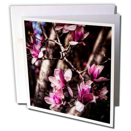 Budding Magnolia - 3dRose Boehm Photography Flower - Budding Magnolia Flowers - 1 Greeting Card with envelope (gc_127509_5)