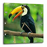 3dRose dpp_85574_3 Toco Toucan, Tropical bird, Iguacu Falls NP, Brazil – SA02 KSC0005 – Kevin Schafer – Wall Clock, 15 by 15-Inch