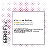 Boric Acid Vaginal Suppositories SEROFlora 600mg 28 Counts - pH Balance for Women and Feminine Care - Made in USA