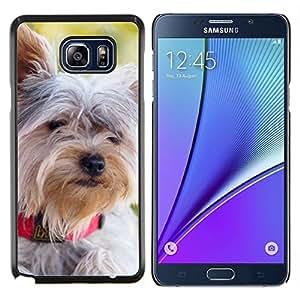 Schnauzer Norfolk Terrier Havanese- Metal de aluminio y de plástico duro Caja del teléfono - Negro - Samsung Galaxy Note5 / N920
