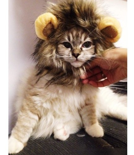 Dogloveit Lion Mane for Cat Appreal, Pet Costume Lion Wig for Dog Cat Halloween Pet Dress up with Ears]()