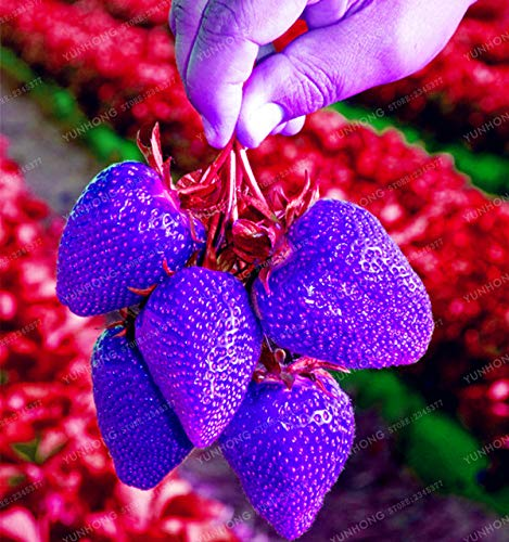 Plant - Rare Strawberry Bonsai Very Delicious Super Sweet Fruit Plant Balcony Potted Plants Home 100 Pcs