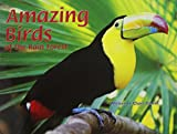 img - for Amazing Birds of the Rain Forest (Pair-It Books) book / textbook / text book