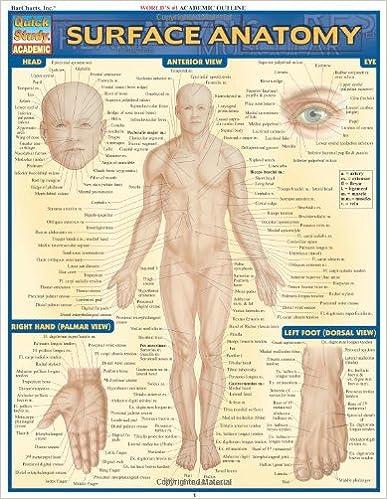 Surface Anatomy (Quickstudy: Academic): 9781572228146: Medicine ...