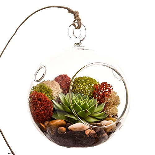 "Bliss Gardens Succulent Terrarium Kit with Moss and River Rocks - 4"" Round Glass"