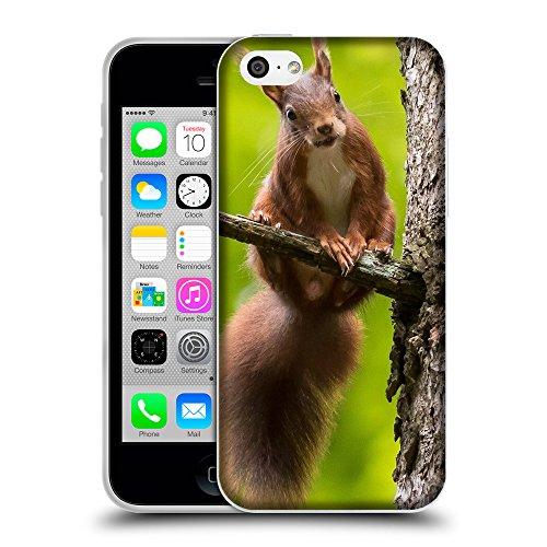 Just Phone Cases Coque de Protection TPU Silicone Case pour // V00004163 écureuil roux curieux sur un arbre // Apple iPhone 5C