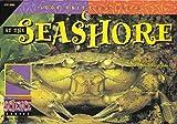 At the Seashore, David M. Schwartz, 1574712098