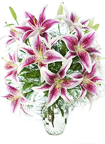Enchanting 10 Stargazer Lilies Bouquet with Greens from KaBloom, With Vase