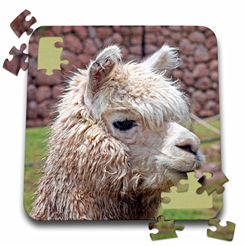 Valley Alpaca - 6