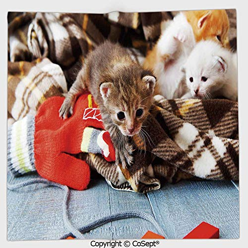 - AmaUncle Microfiber Square Towel,Kittens and Mittens Newborns Baby Animals in an Plain Blanket Wood Play Toys Adorable,Suitable for Camping,Running,Cycling,Gym(19.68x19.68 inch),Multicolor