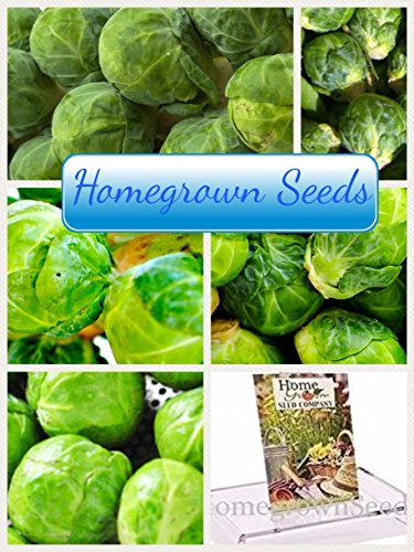 Homegrown Cabbage (Homegrown Brussel Sprouts Seeds, 300 Seeds, Organic Catskill)
