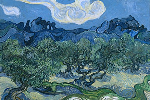 Olive Trees Art Print Poster 18x12 inch ()