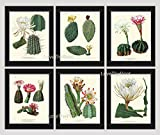 Botanical Print Set of 6 Antique Beautiful Cactus Plant Blooming White Pink Yellow Flowers Tropical Desert Garden Nature Home Room Decor Wall Art Unframed offers