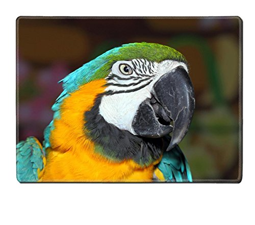 Luxlady Placemat Blue and Gold Macaw IMAGE 19450430 Customized Art Home Kitchen