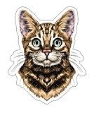 JS Artworks Bengal Spotted Striped Head Vinyl Bumper Sticker Decal Cat Family Pet Love
