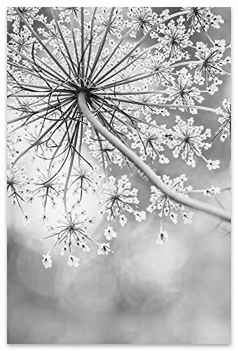 Classy Queen Anne's Lace Flower Black and White Fine Art Photography Print. by Angie Rea