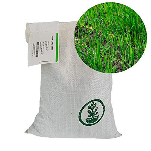 Winter Rye Seeds - 50 Lbs Bulk - Non-GMO Rye Grain Cover Crop Seeds