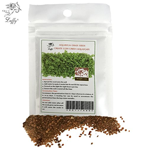 Review Luffy Aquarium Grass Seeds
