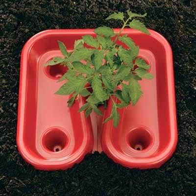 Tomato Tray - Gardeneer Red Tomato Enhancing Trays, Pack of 12