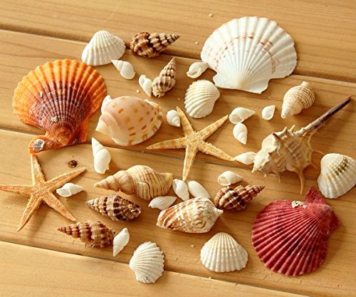 Mixed Seashells Set Includes an Assortment of Natural Beach Sea Shells (100g)