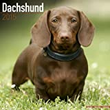 Dachshund Calendar - Just Dachshund Calendar - 2015 Wall calendars - Dog Calendars - Monthly Wall Calendar by Avonside