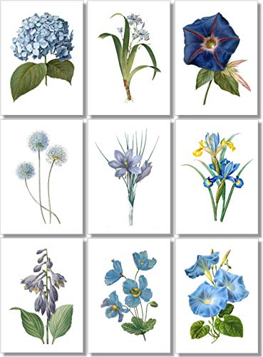 Botanical Prints Wall Art - Vintage Blue Flowers - (Set of 9) ? 5x7 - Unframed - Floral Decor