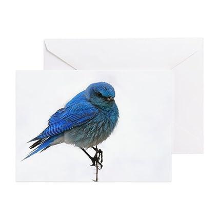 Amazon cafepress mountain blue bird greeting card note cafepress mountain blue bird greeting card note card birthday card blank m4hsunfo