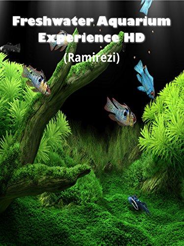 freshwater-aquarium-experience-hd-ramirezi