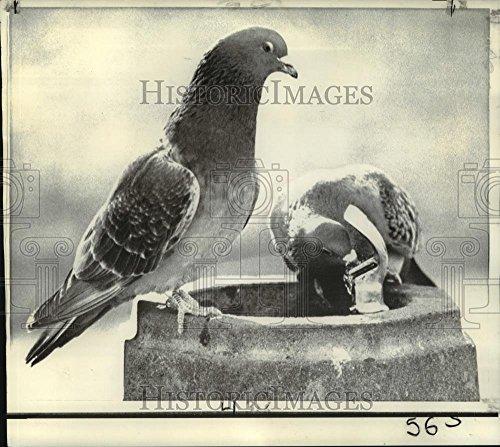 Vintage Photos 1973 Press Photo Pigeons at Washington Park Bird Bath, Washington, D.C. - 8 x 9 in. - Historic Images