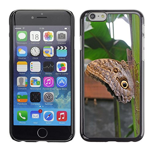 Bild Hart Handy Schwarz Schutz Case Cover Schale Etui // M00134222 Schmetterlings Insekten Costa Rica // Apple iPhone 6 PLUS 5.5""