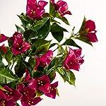 Windowbox-Outdoor-Artificial-Bougainvillea-Bush-35-inches-LavenderFuchsia-Color-Flowers