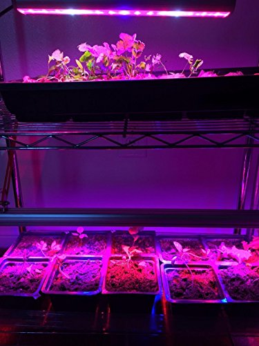 LED Grow Light, 108W Waterproof growing light bar with UV/IR/Red/Blue Spectrum for Garden Greenhouse Hydroponic Indoor Plants Growing by Lightimetunnel by Lightimetunnel (Image #6)