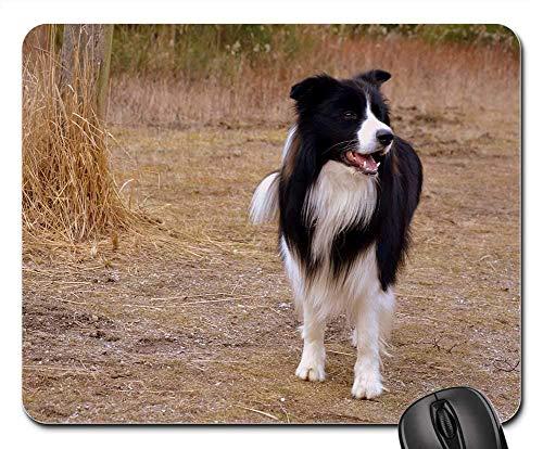 - SYMSPAD Mouse Pad 8.6 X 7.1 in - Dog Herding Dog British Sheepdog Border Collie