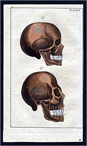 Gebiss set of teeth Schädel Anatomie anatomy Medizin medicine ...