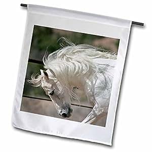3dRose fl_84090_1 And allusion Stallion Running, Horse-NA02 LKL0002-Lee Khoper Garden Flag, 12 by 18-Inch