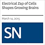 Electrical Zap of Cells Shapes Growing Brains | Kate Baggaley